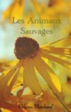 Les animaux sauvages by OdysseeWillow