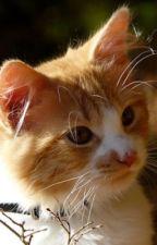 Adoptables :D by KittiesEatDogs