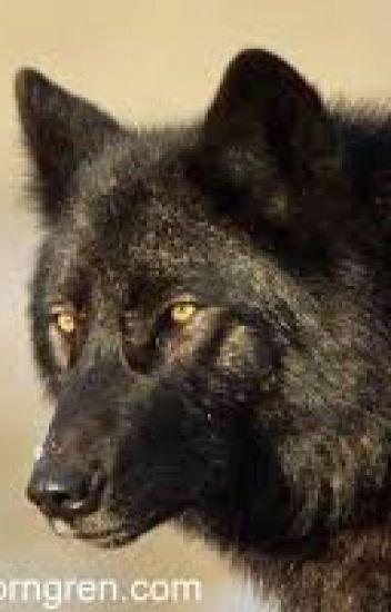 Werewolf 101 (Complete)