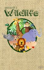Wildlife [narry] c.s. by yaccuzoh