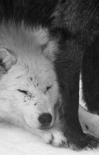 Lone Wolf(boyxboy) by chocolateandrainbowl