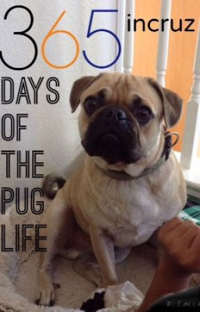 365 Days of the Pug Life by incruz