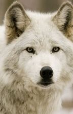 Alone (Wolf POV Story) by Echangle