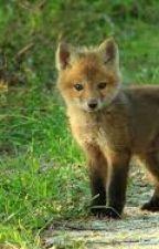 My Pet Fox by chloey_bynum