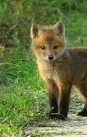 My Pet Fox - Chapter 1  Baby Fox Going Hunting - Wattpad