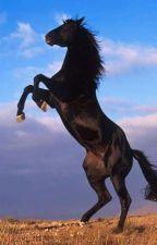 Ouragan, cheval mystérieux by flavieDavion