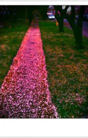The Petaled Path by Allison158