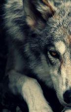 Vilkas vampyro kune by Ariaxxxxx
