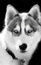 los ojos del perro siberiano by DanielaCuchimaqueGon