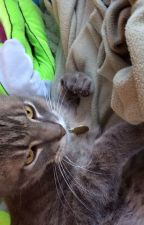 Warrior Cats Name Generator by -Hazelstar-