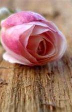 Rose in Bloom by RichardHigley