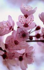 The blossom tree by Ludoborgo
