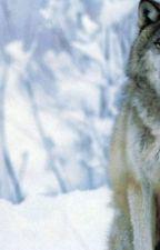Der Schnee Wolf by ClanWolfGirl