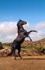 The midnight brumbies by horsey_devil