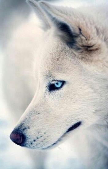 Mine (boyxboy werewolf)