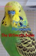 Perfect little Parakeets: The Ultimate Guide by ava_dee