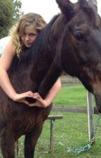 Horse Academy by choccy123