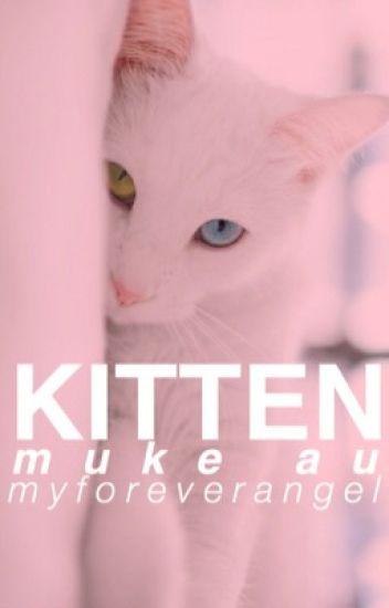 kitten || muke au