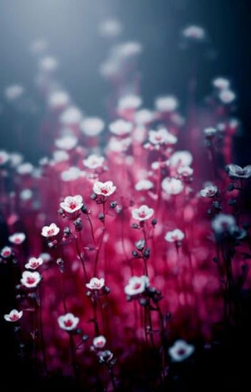 Hüzün Çiçekleri