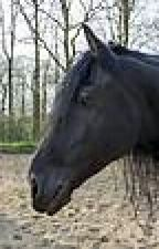 WILD (a horse story ) by arizonapitbull