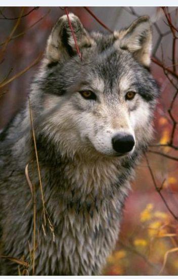 Wolfgirl (Teen Wolf ff)
