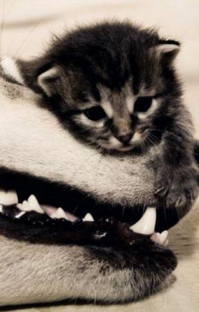 Purr For Me Kitty [ON HOLD] by RedLolipopGirl