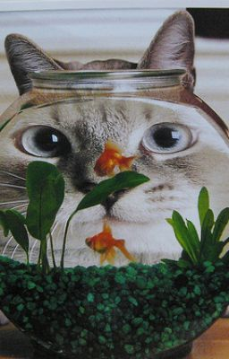 The short story of a cat and a fish wattpad for Fish short story