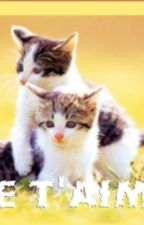 Un amour de chatons by chatmille
