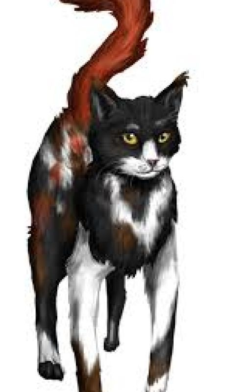 Warrior Cats Name Gen by InvalidArgument