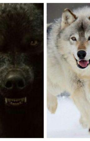 A wolf's choice (Sam by Fan_Author