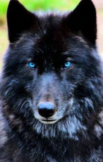 The Blue-eyed Wolf (Jeremy Danvers)