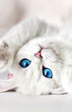 The Lost Werecat Princess by CuddlesBabyCakes