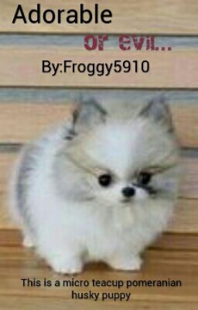 Adorable Or Evil Chapter 3 Best Dog Ever Wattpad