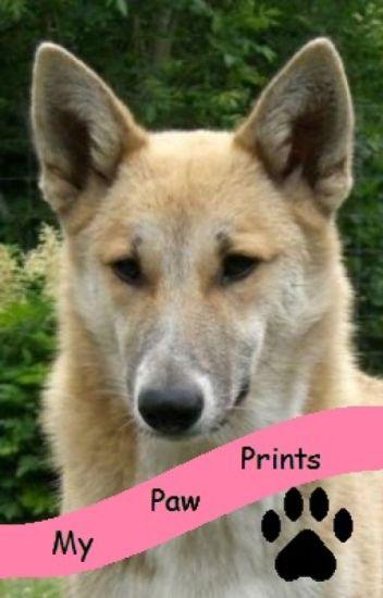 My Paw Prints (tmnt fanfic)
