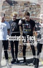 Adopted by 5sos (Finished) by michaelsreflection