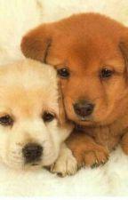 Cameron x Alex (New pups who join Paw Patrol) by HalnukiaTheWolf