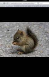 The very lonely squirel by dclejan
