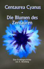 Centaurea Cyanus - Die Blumen des Zentauren by AnsgarSilverberg
