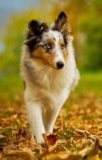 Streunende Hunde by Bayerle
