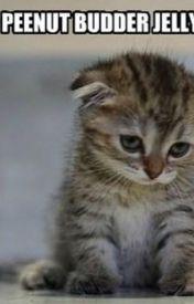 Cat Memes by GhostWriter8648