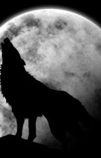 Aggressive wolf by floragohier