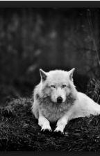 So Called Werewolf (BoyxBoy) by SecretMessage101