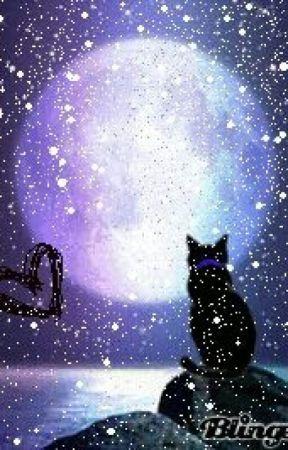 My warrior cat Ocs by PenguinMeowCat98
