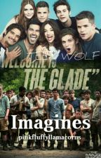 Teen Wolf and Maze Runner Imagines by pinkfluffyllamacorns
