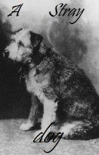A stray dog by mwauha2