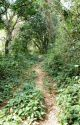 The Trail by AnirudhVats