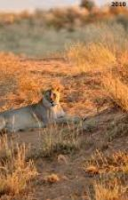 The Last Lioness: As A Juvenile by TeenageDreamCatcher