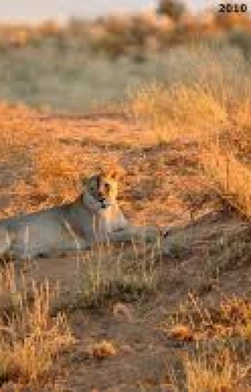 The Last Lioness: As A Juvenile