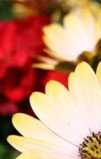Daisy by Non_Toxic