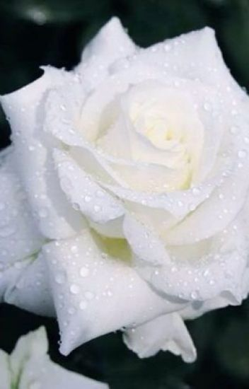 the wight rose alone and dark wattpad